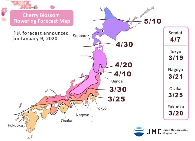 Цветение сакуры в Японии 2020