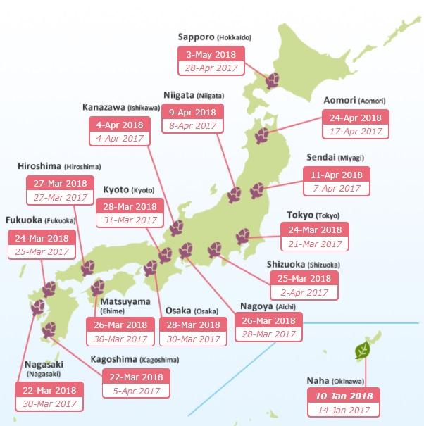 График цветения сакуры в Токио
