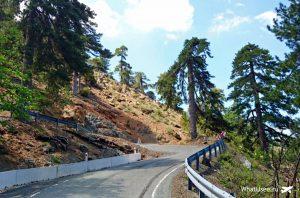 Дорога к водопаду Каледония
