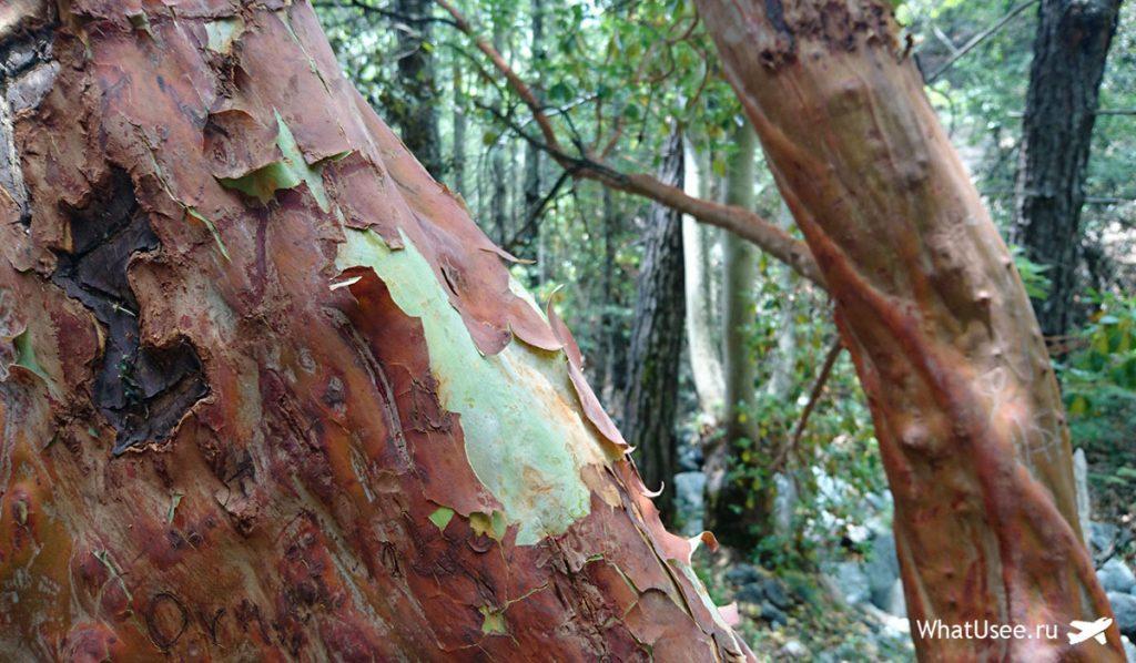 Природа у водопада Каледония