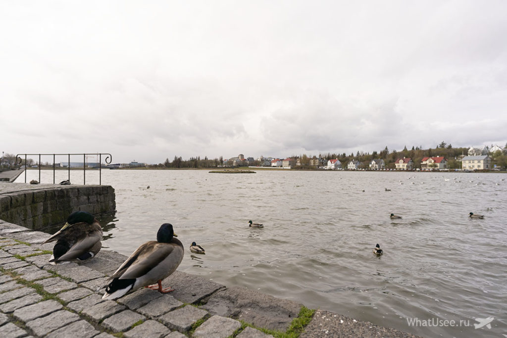 Что стоит посмотреть в Рейкьявике в Исландии