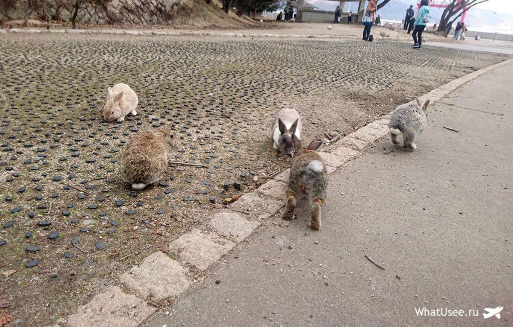 Кроличий остров Окуносима на юге Японии