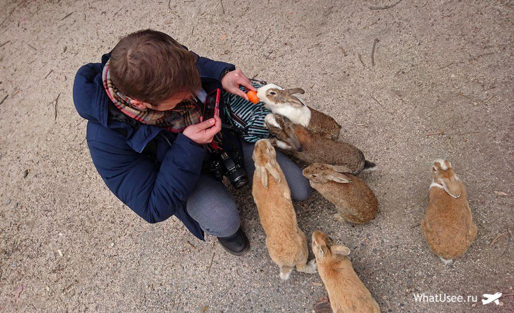 Остров с кроликами Япония