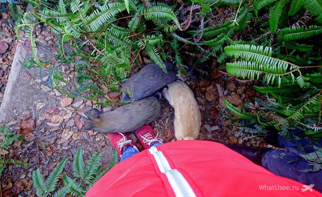 Остров с кроликами Окуносима