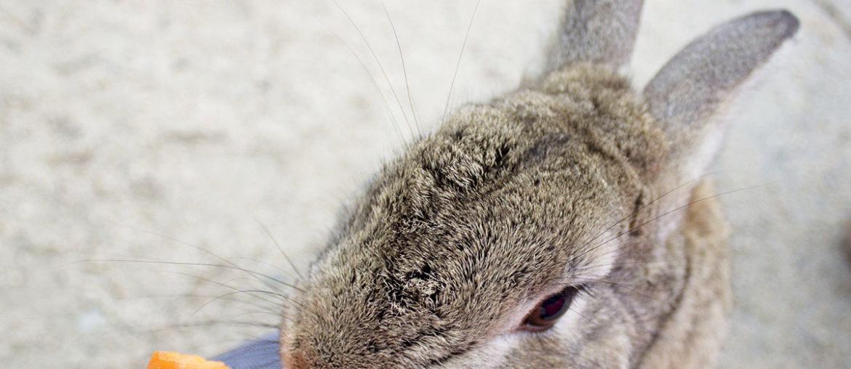 Япония кроличий остров Окуносима