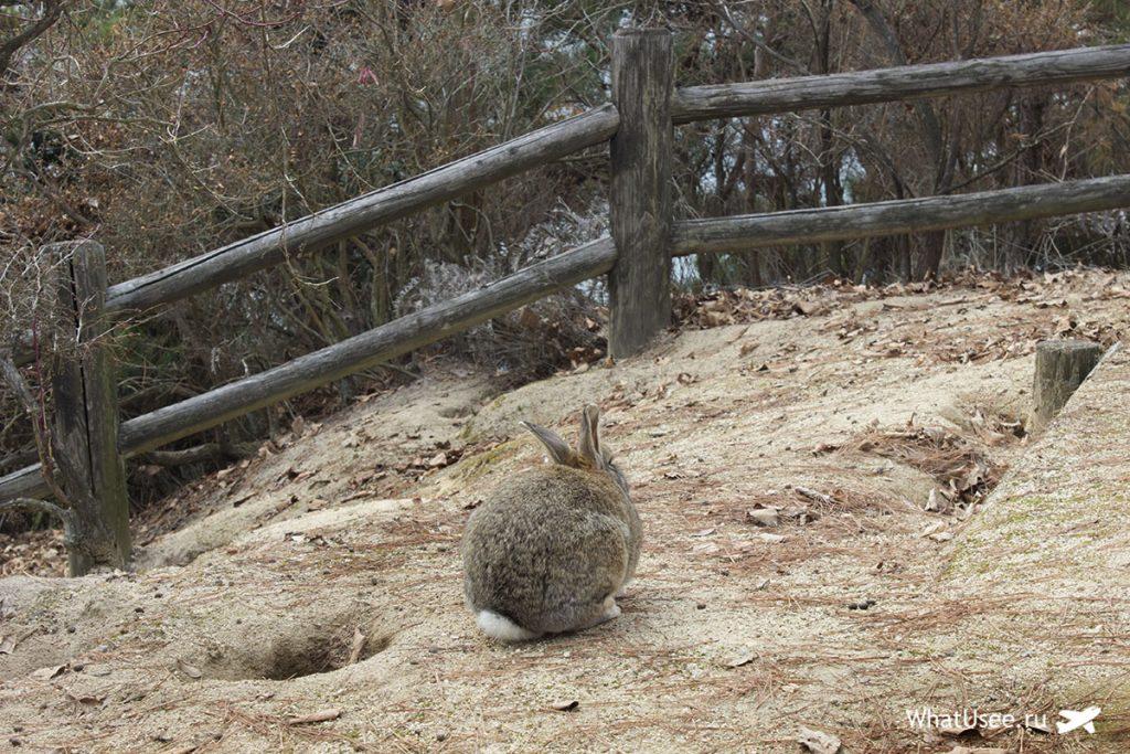 Что можно посмотреть на острове Окуносима в Японии