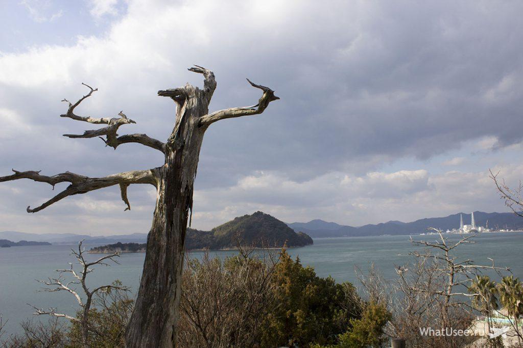 Остров с кроликами Окуносима Япония