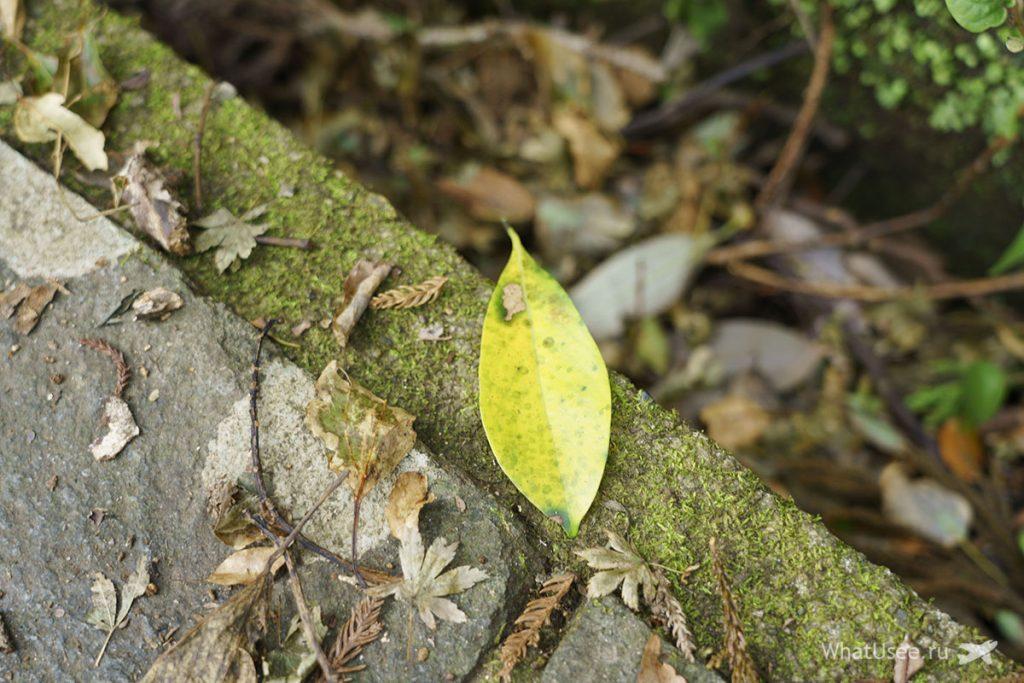 Отзыв о посещении горы Нокогирияма из Токио