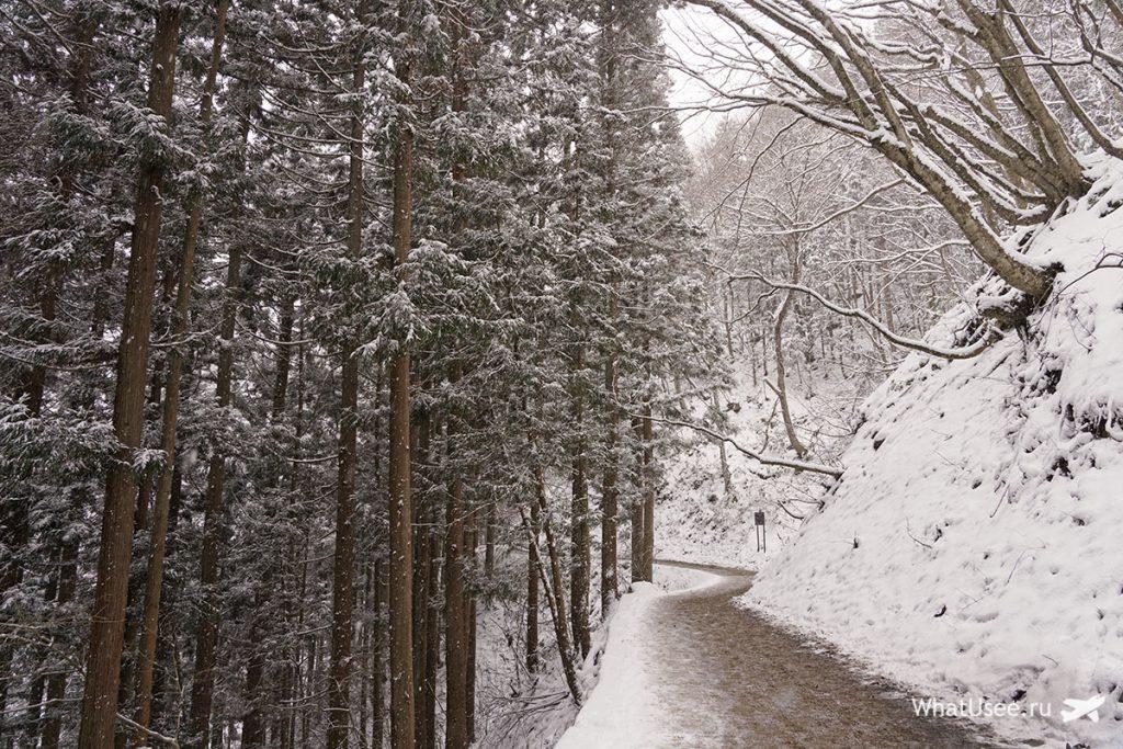 Парк снежных обезьян Япония