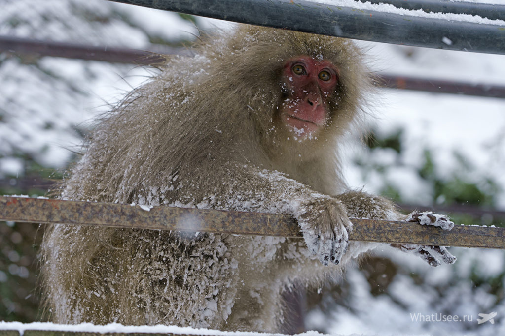 Поездка в Парк снежных обезьян