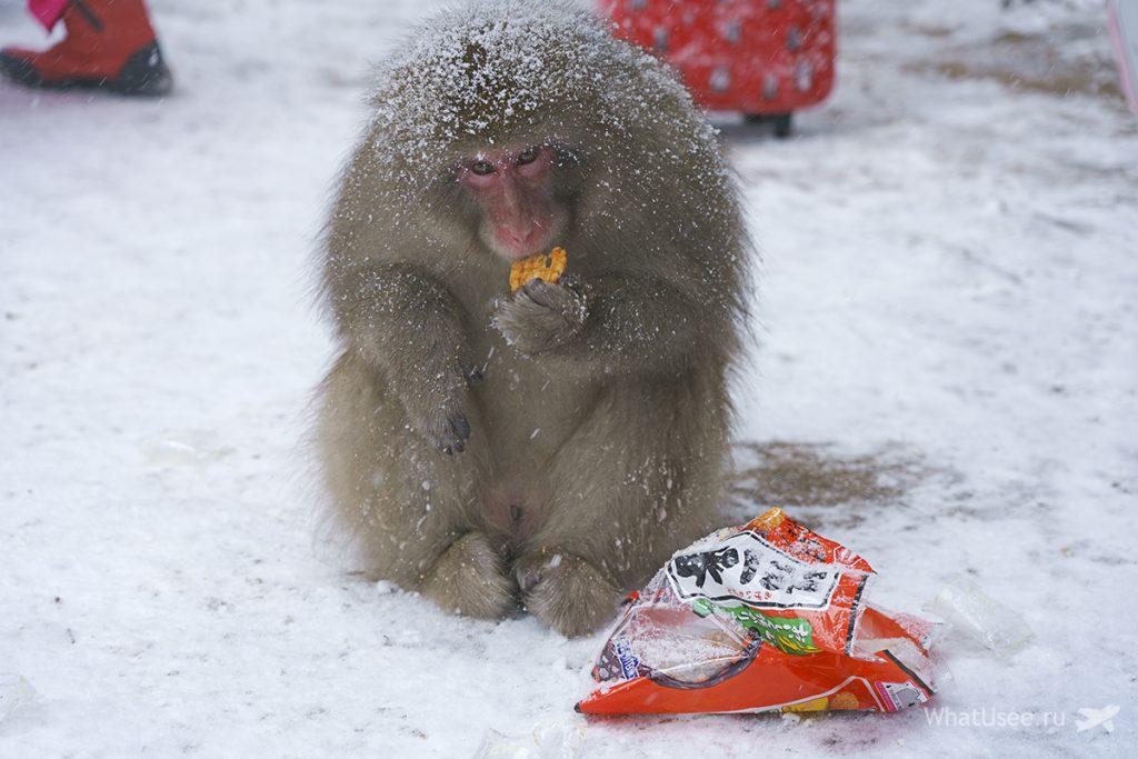 Обезьяны в горячих источниках в Японии